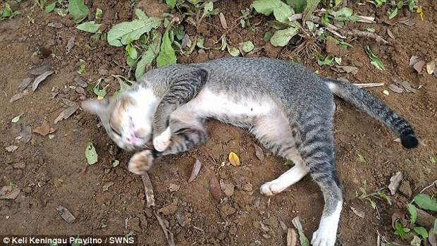 The pet walks to her former home every day where she is fed by the old lady's children - then returns to the grave