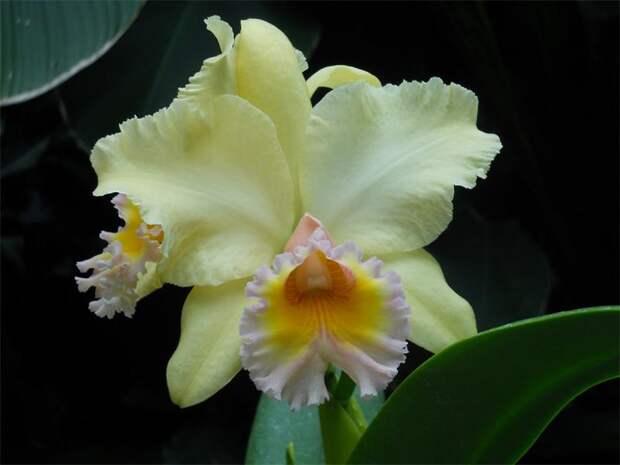 Необычные виды домашних орхидей: какую выбрать?