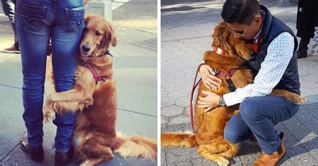 Собака, которая очень любит обниматься