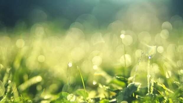 В проезде Соломенной сторожки посеяли новый газон