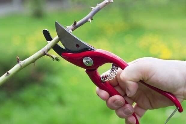 20 советов по обрезке плодовых деревьев и кустарников