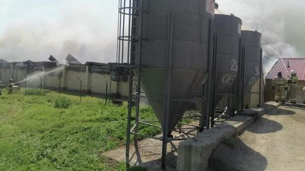 Около 11тыс поросят погибли при пожаре наферме вРостовской области