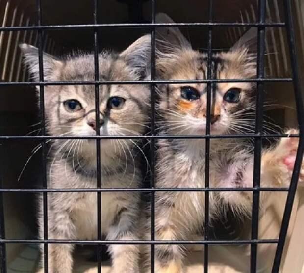 Котята за решеткой