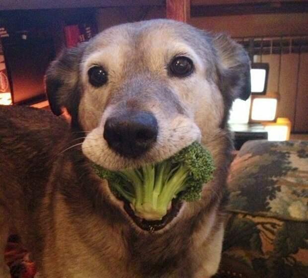 Не съем, так хоть откушу животные, любимцы, отвернулся, улыбка, фото, хозяин, хулиган