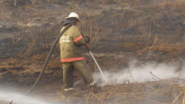 В России за сутки потушили 117 лесных пожаров