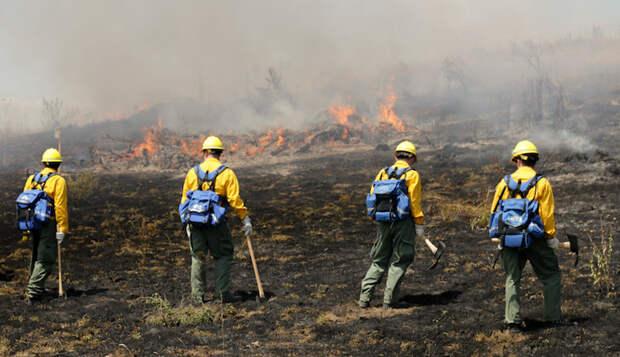 Пара, покинувшая дом из-за лесных пожаров, беспомощно смотрела, как его грабят