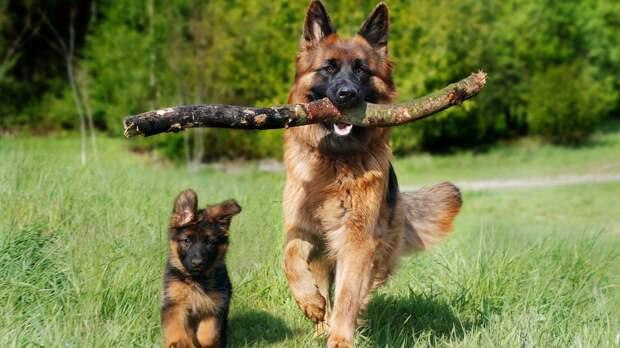 Ученые из США объяснили, как студенты побороли стресс при помощи собак