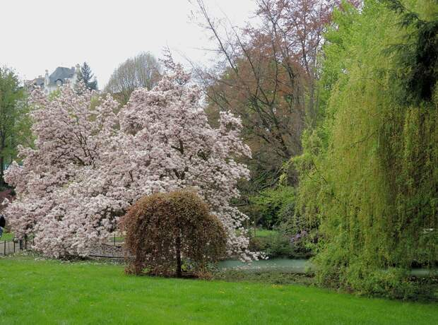 Весна в Карловых Варах!. МАГНОЛИЯ!!!