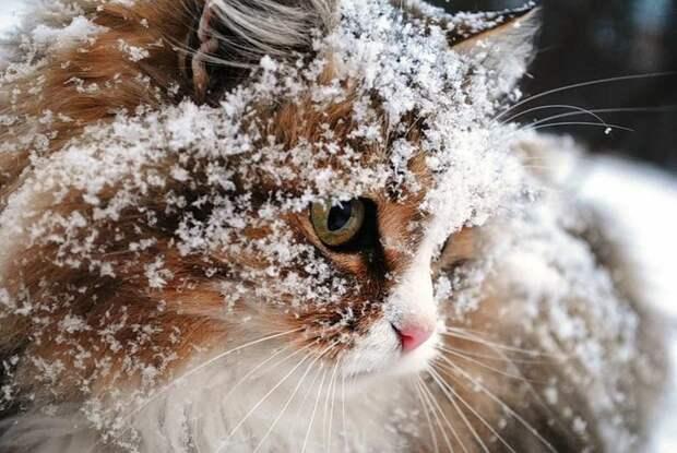 Замёрзла совсем, иди я тебя согрею кошечка...