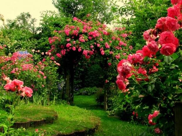 Элементы повторения в цветнике и саду