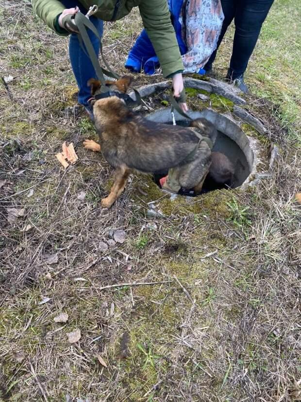 Операция по спасению несчастной собачки, упавшей в люк
