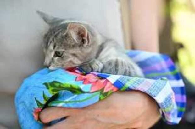 В Рязани прошла выставка бездомных животных «Пойдём домой»