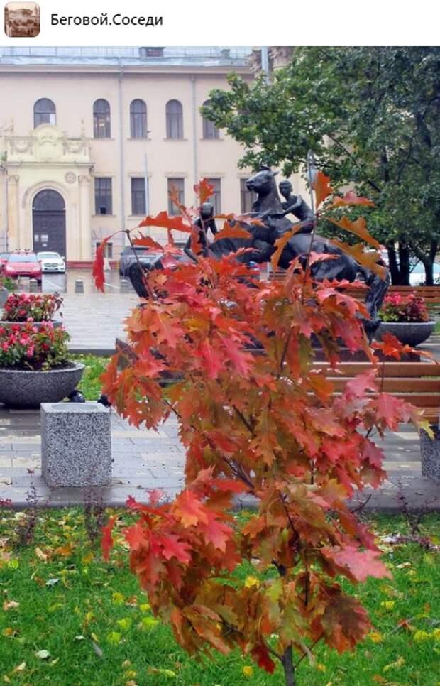 Фото дня: осень добралась до Бегового