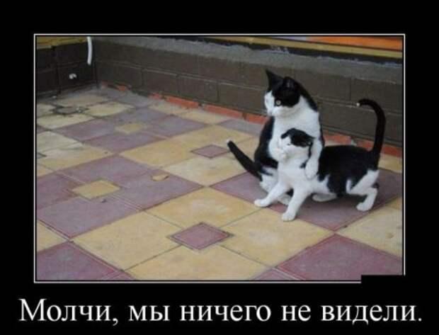 1446709099_29demotivatory_01