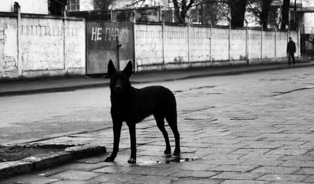 СК возбудил уголовное дело по факту нападения бродячего пса на ребёнка в Новотроицке