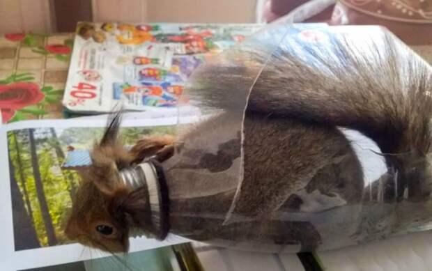 В Царском Селе спасли белку, застрявшую в бутылке-кормушке