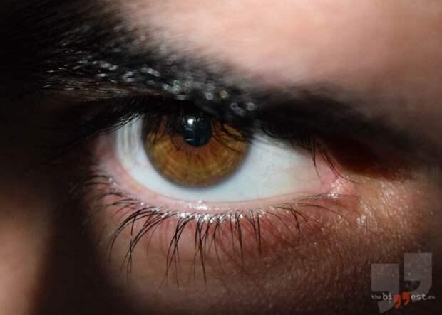 Карие глаза. CC0