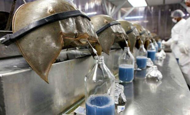 10 самых дорогих животных жидкостей на планете