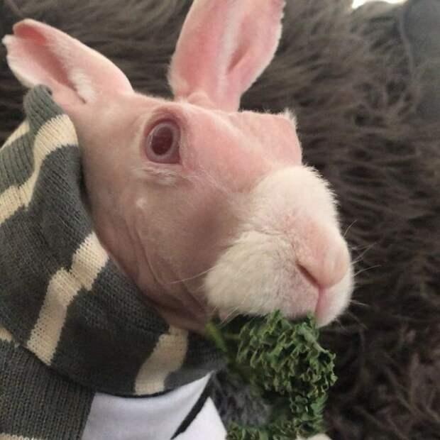 Уникального лысого кролика спасли от эвтаназии и сделали звездой соцсетей