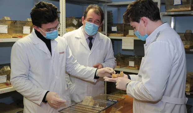 Белгородские учёные создали линию чувствительных ккоронавирусу мышей