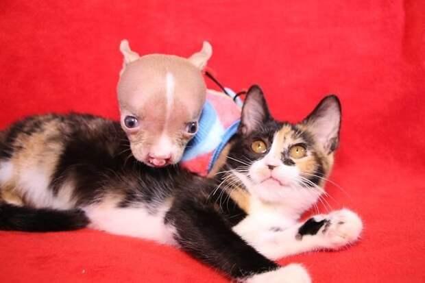 Безусловная любовь: хозяйка отказалась усыплять собаку, родившуюся с заболеваниями
