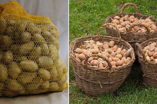 Древний славянский способ хранения картошки, чтобы обойтись без порчи продукта