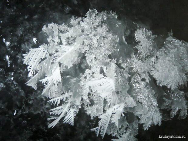 Морозные цветы