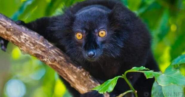 15 фактов о животных, доказывающих их уникальность