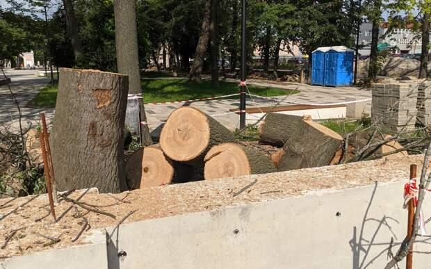 В рязанском «Наташином парке» при благоустройстве вырубили больше 20 деревьев