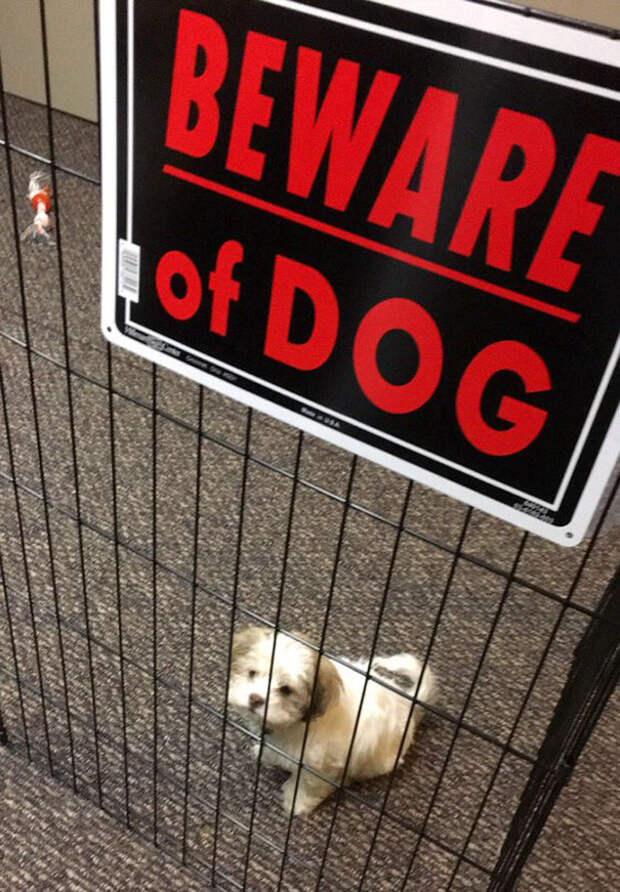 «Злые собаки», которых хочется немедленно погладить