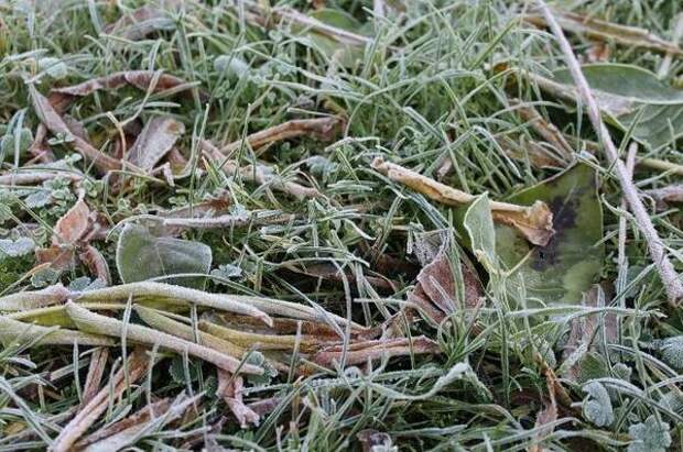 В Орловской области с 9 на 10 мая ожидаются заморозки