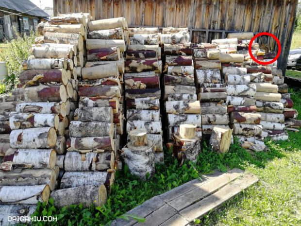 Тест на внимательность: найдите за 30 секунд белку среди дров