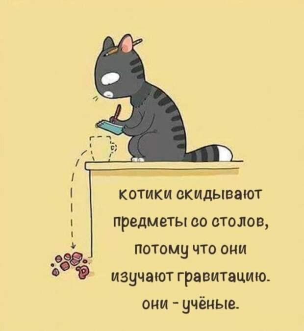 Почему коты так любят скидывать мелкие предметы со столов и полок?