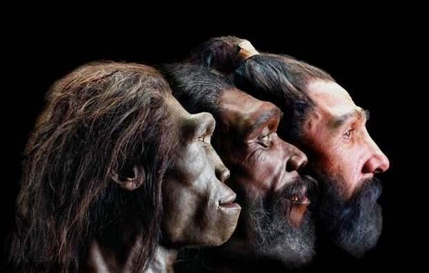 От обезьяны? От кого произошел человек по записям древних шумер