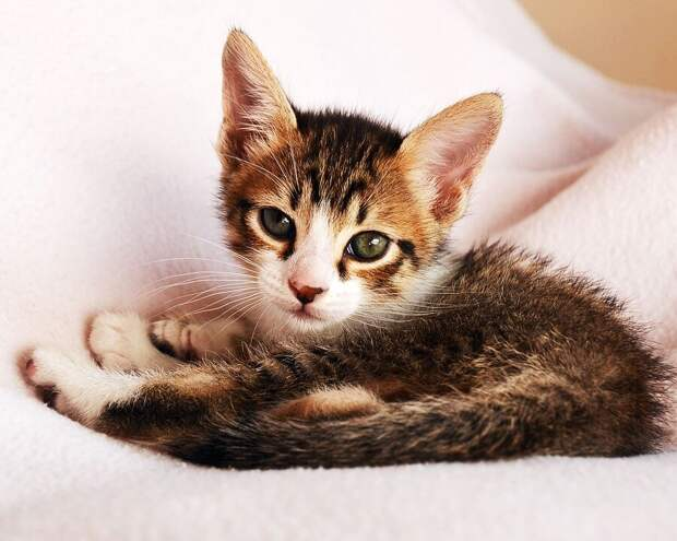 Студентка подобрала погибавшего на улице котёнка и готовилась отдать ветеринару последние деньги. Но он отработал за спасибо