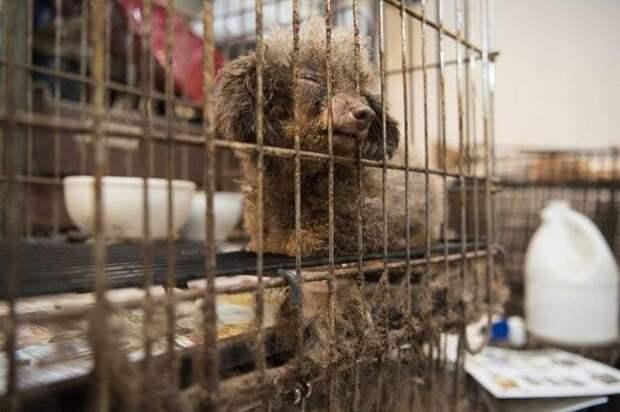 Всю свою жизнь она провела запертой в маленькой клетке в подвале здания до и после, доброта спасет мир, домашние животные, история собаки, пудель, собака, спасение животных, спасение собаки