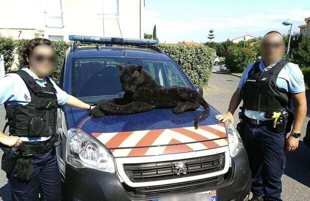 Французские жандармы «арестовали» плюшевую пантеру