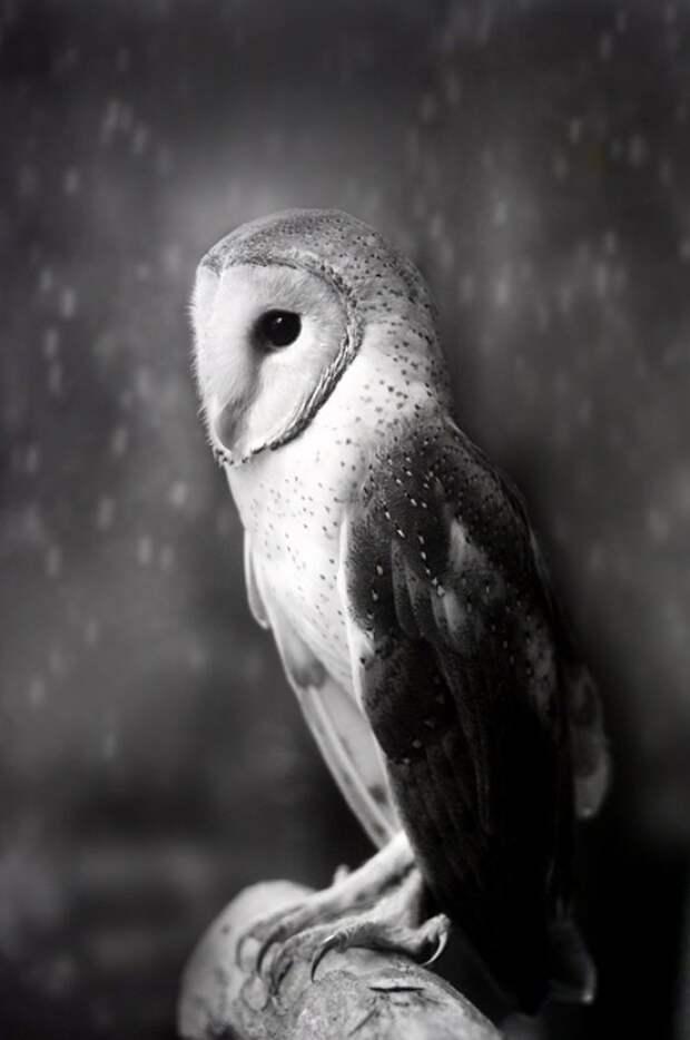 Совы - истинное чудо природы дикая природа, красиво, мир, планета, природа, птицы, совы, фото