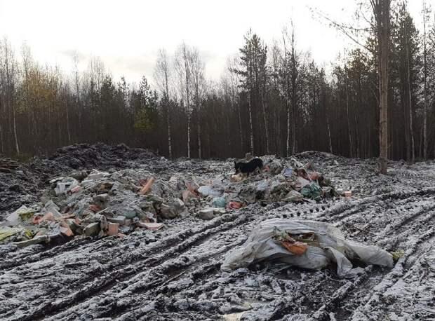 В Сегеже появилась стихийная свалка строительного мусора