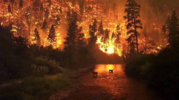 Площадь лесных пожаров в России достигла 53,4 тыс. гектаров