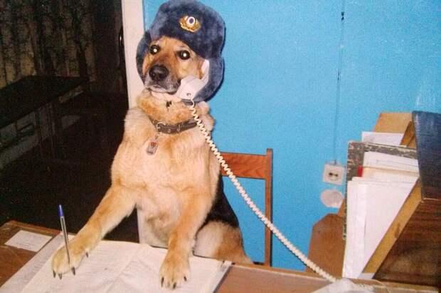 Собака оказалась на редкость сообразительной.