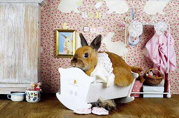 сон, привычка, кролик