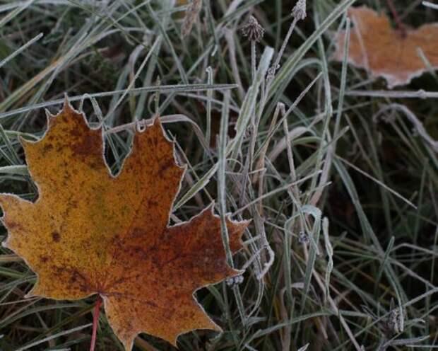 Заморозки в Тульской области ожидаются сегодня ночью