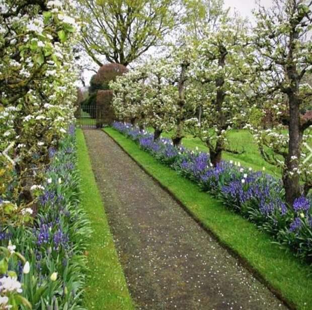 Удивительные способы формирования садовых деревьев и кустарников: 30 фото-идей