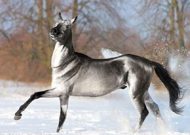 23 фотографии лошадей, которые кажутся ненастоящими из-за своей красоты
