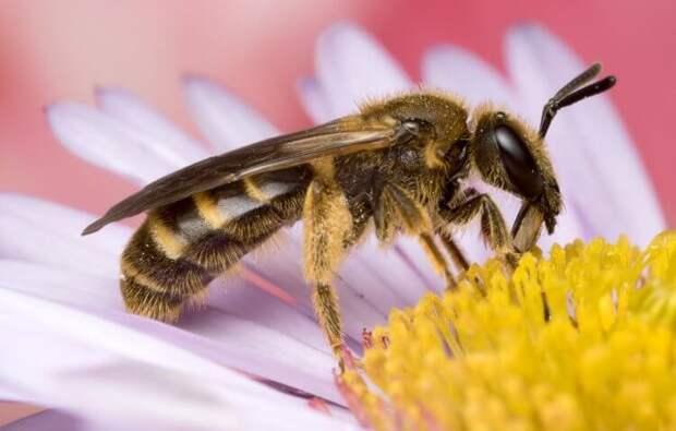 Что произойдёт с Землёй, если с неё исчезнут все насекомые?