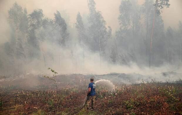 Площадь погибших из-за пожаров лесов может быть до 15 раз выше статистики