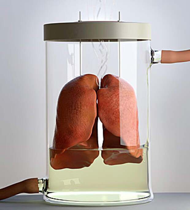 C0239057-Spare_lungs_conce.jpg
