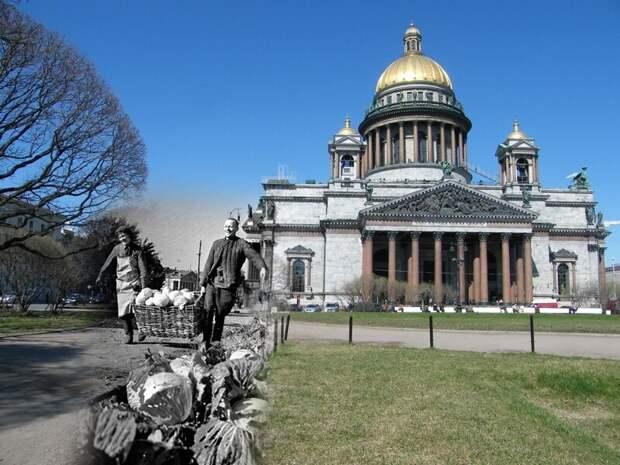 Ленинград 1942-2009 Исаакиевская площадь. Выращенная капуста блокада, ленинград, победа