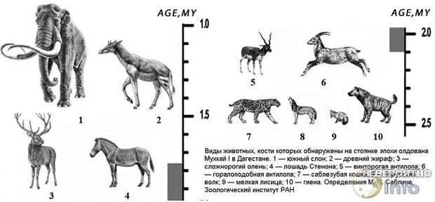 На территории Кавказских гор жили слоны и предки жирафов